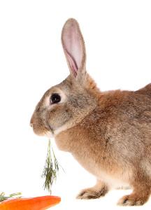 Easy Easter Menu & Recipes